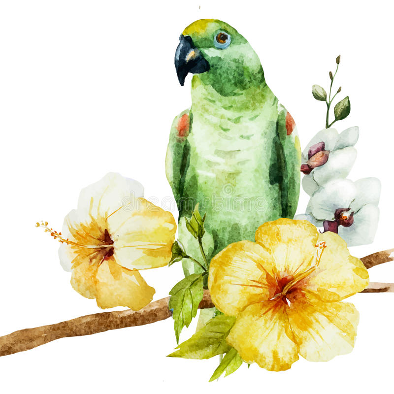 Watercolor parrot stock illustration