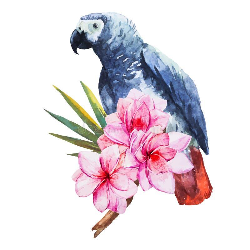 Watercolor parrot vector illustration