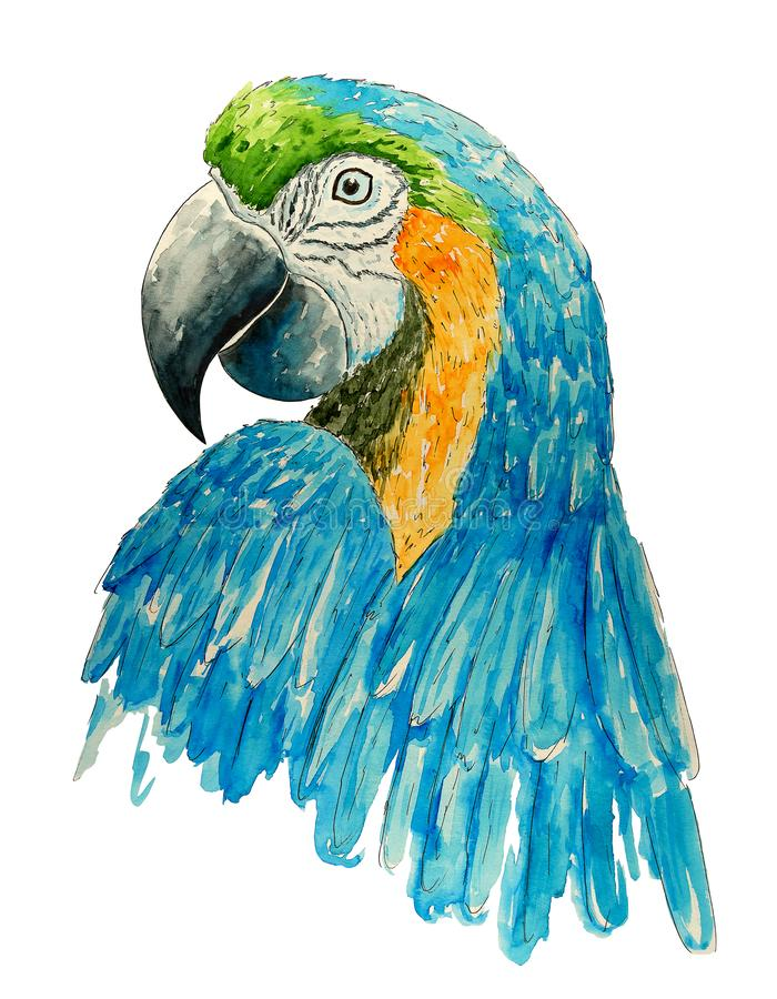 Watercolor parrot. Bright tropical  bird. T-shirt graphics. Watercolor textured macaw. Handmade drawn  background vector illustration