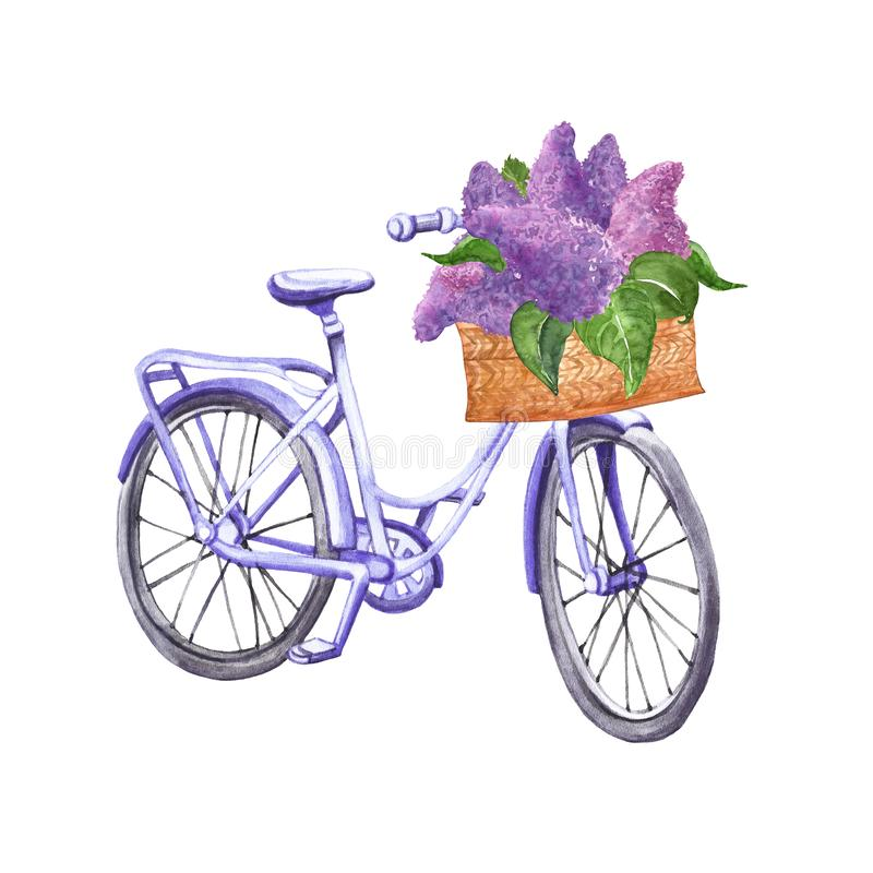 Watercolor pastel blue vintage bicycle illustration. Hand drawn beach cruiser with basket and purple lilac flowers, isolated on royalty free stock photo