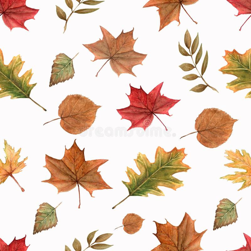 Watercolor pattern of autumn leaves on a white background. Autumn collection of fall leaves on white background seamless pattern royalty free illustration