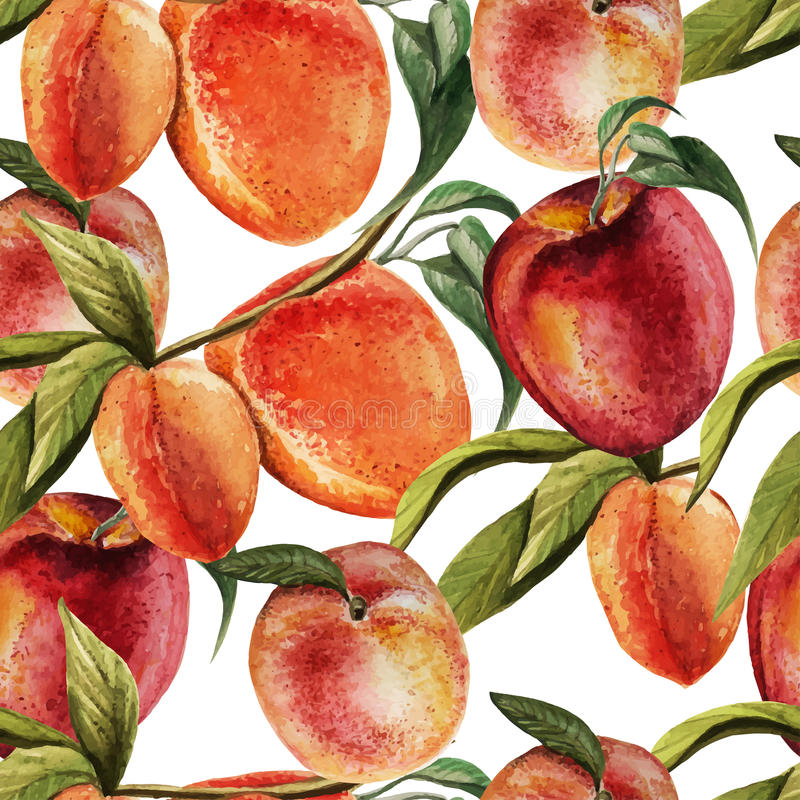 Watercolor pattern with peaches. On a white background.. Vector royalty free illustration