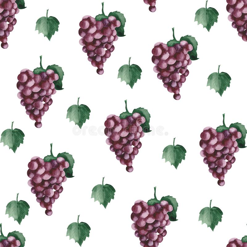 Watercolor pattern with purple grapes and grape leaves. Watercolor pattern with purple grapes, grape leaves on a white background vector illustration