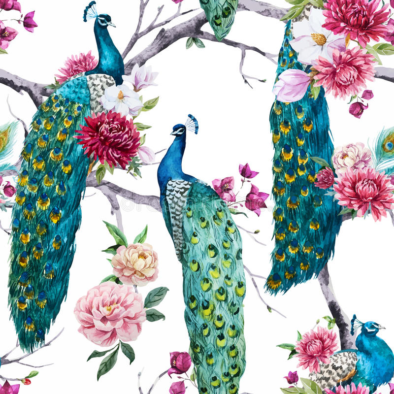 Watercolor peacock και σχέδιο λουλουδιών απεικόνιση αποθεμάτων