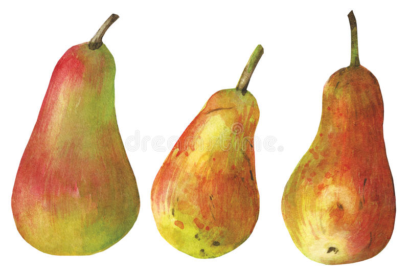 Download Watercolor pear on white stock illustration. Image of creativity - 34642278