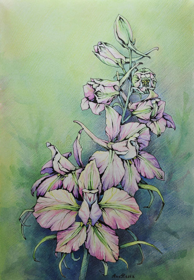 Download Watercolor And Pencil Flower Stock Image - Image: 20313721