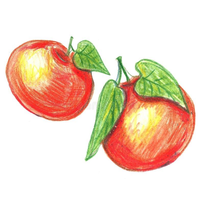 Watercolor pencils mandarine orange fruit. With leaves isolated on white . Orange citrus tree. Tangerine with leaves. Hand painted illustration stock illustration