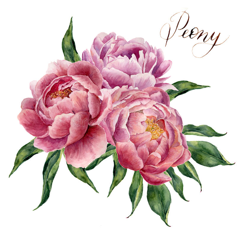 Watercolor peonies bouquet isolated on white background. Hand painted pink peony flowers and green leaves. Floral illustration for stock illustration