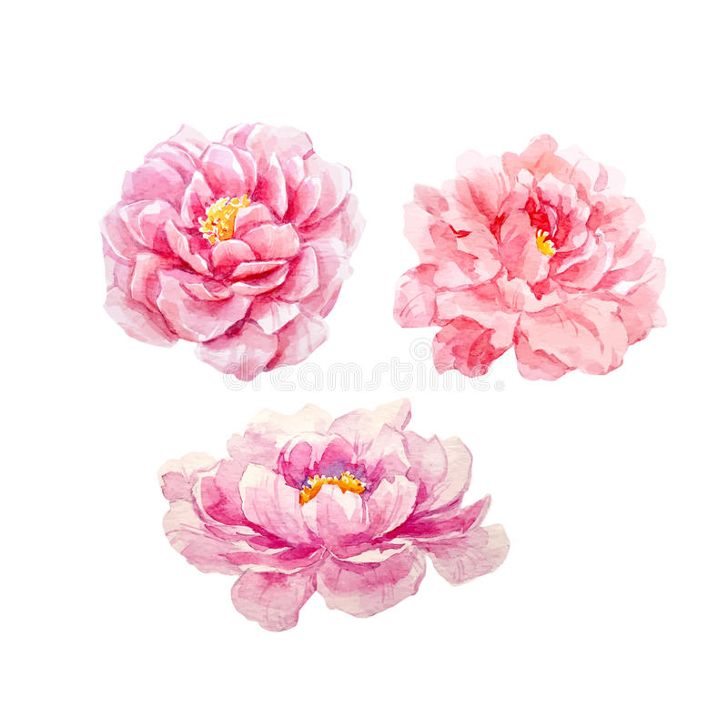 watercolor peony vector set stock vector illustration of rh dreamstime com peony vector image peony vector