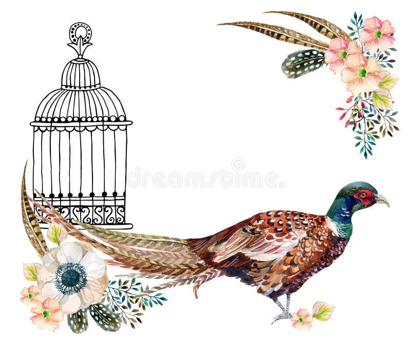 Watercolor pheasant card. Watercolor Swinhoe pheasant card. Hand painted illustration with Anemones, herbs, feathers, pheasant and bird cage vector illustration