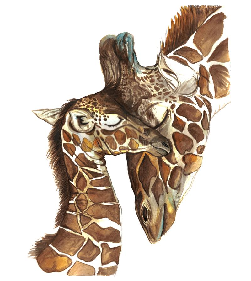 Watercolor picture animal mammals living in Africa giraffes, mother and child, female giraffe and cub, portrait o. F giraffes, care and love, maternal instinct stock illustration