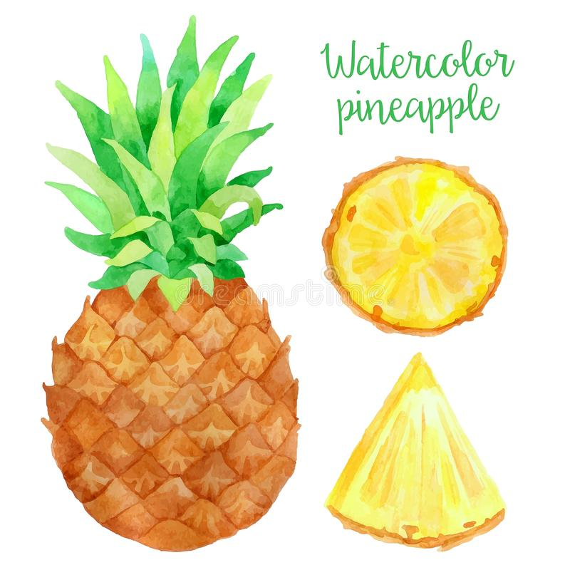 Watercolor pineapple stock vector. Illustration of ...