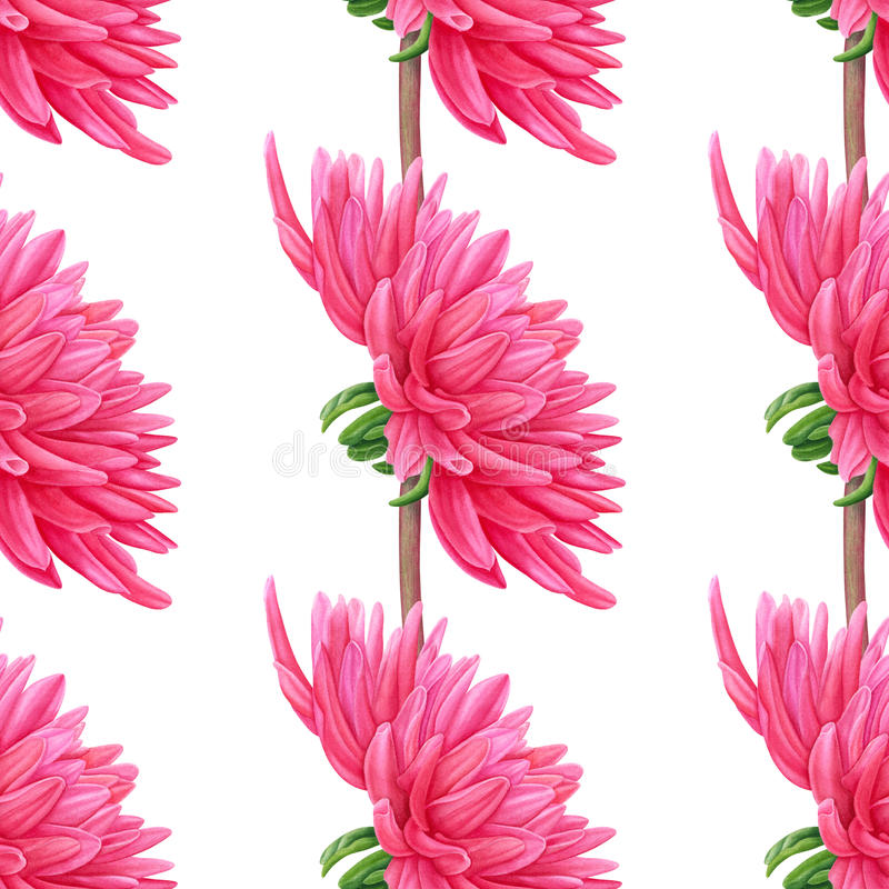 Watercolor pink Dahlia. Seamless pattern. Botanical art. Template for a business card, banner, poster, notebook vector illustration