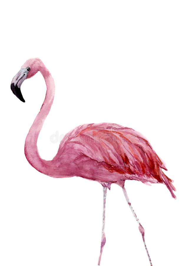Watercolor pink flamingo. Exotic hand painted bird illustration isolated on white background. For design, prints or vector illustration