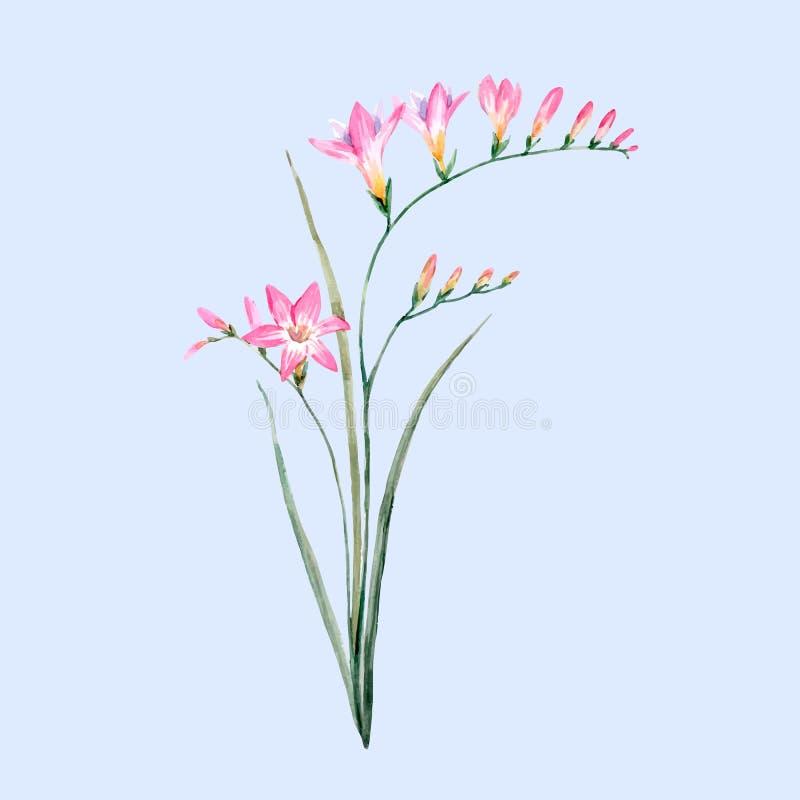 Watercolor pink freesia flower stock vector illustration of flower download watercolor pink freesia flower stock vector illustration of flower clip 84472183 mightylinksfo