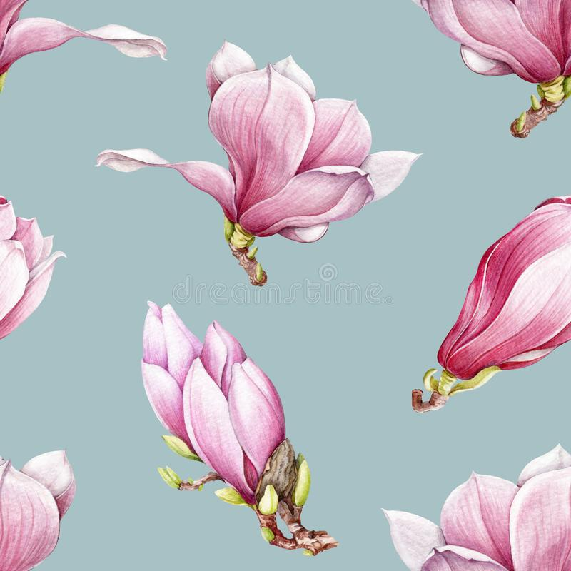 Watercolor pink magnolia blooming seamless pattern. Beautiful hand drawn tender spring blossoms on a blue background stock illustration