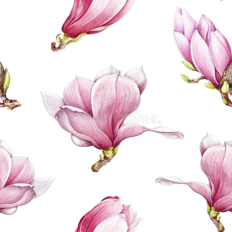 Watercolor pink magnolia blooming seamless pattern. Beautiful hand drawn tender spring blossoms on a white background. stock illustration