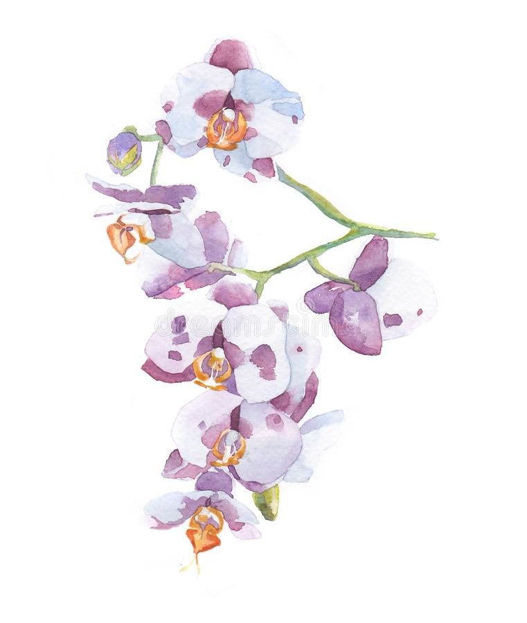 Watercolor pink and orange orchid bouquet isolated stock illustration