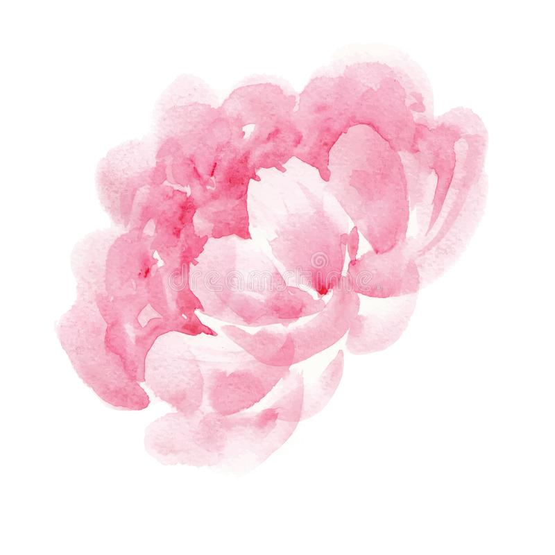 Watercolor pink peony vector illustration