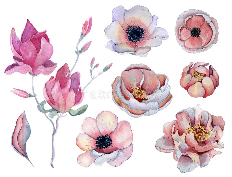 Watercolor pink and purple peonies and anemone flowers set vector illustration