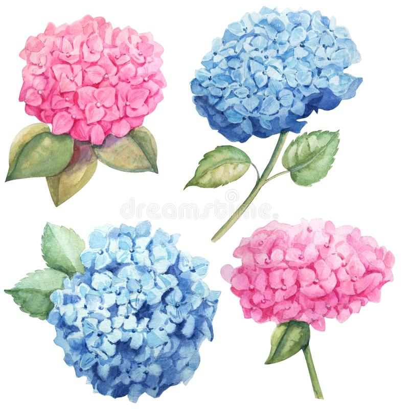Watercolor pink and sky blue hydrangea set for design stock illustration