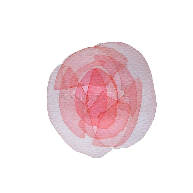 Watercolor pink transparent layered Flower rose on white background vector illustration