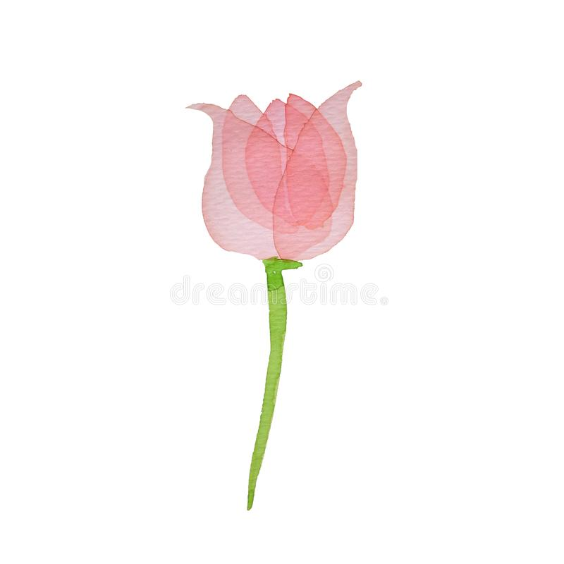 Watercolor pink transparent layered Flower tulip on white background royalty free illustration