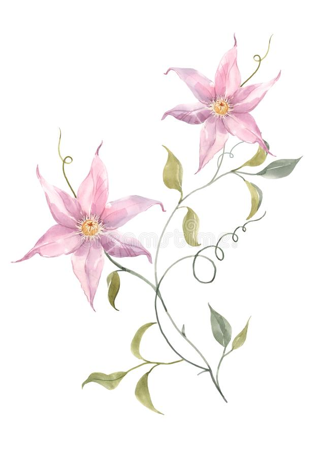 Watercolor pink tropical flowers stock illustration
