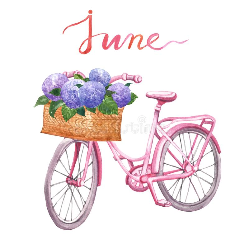 Watercolor pink vintage bicycle illustration. Hand drawn beach cruiser with basket and flowers, isolated on white background. Summer clipart with hand painted royalty free illustration