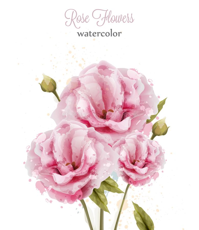 Watercolor pink wild roses isolated Vector. Beautiful floral decors banners. Watercolor pink wild roses isolated Vector. Beautiful floral decors banner stock illustration