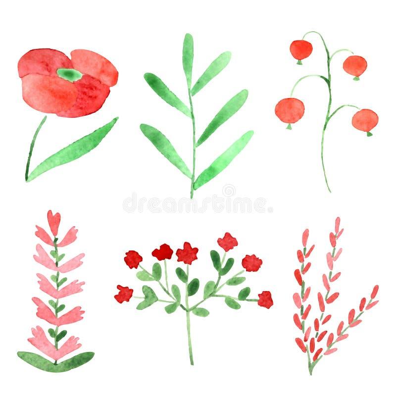 Watercolor plants stock illustration
