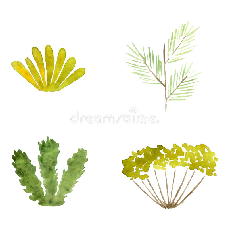 Watercolor plants vector illustration