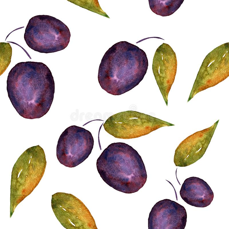 Watercolor plums with leaves on a white background. stock illustration