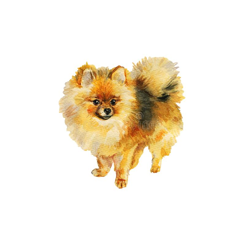 POMERANIAN SPITZ CHARMING DOG GREETINGS NOTE CARD BEAUTIFUL DOGS HEAD STUDY