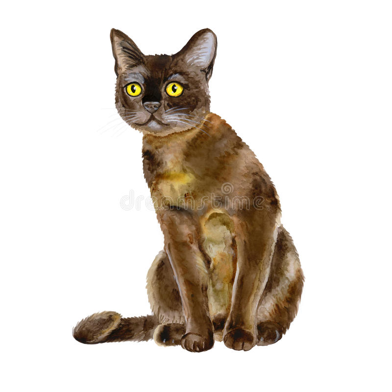 Watercolor portrait of American Bombay shorthair cat on white background. Hand drawn sweet home pet. Bright colors, realistic look. Yellow eyes. Greeting card royalty free stock photos