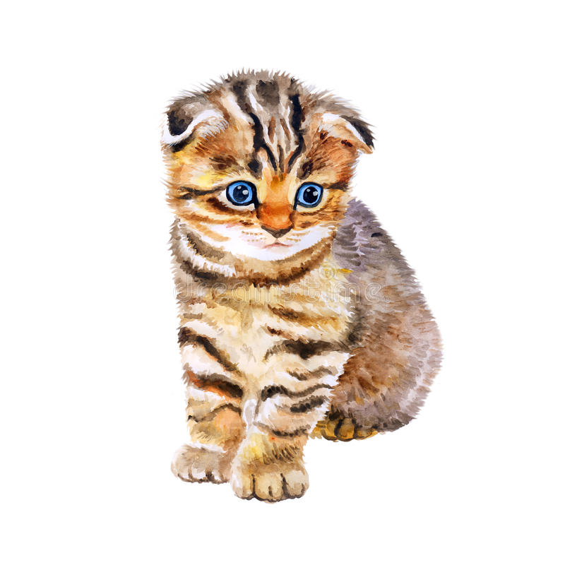 Watercolor portrait of British scottish fold kitten with odd eyes on white background. Hand drawn sweet home pet. royalty free stock images