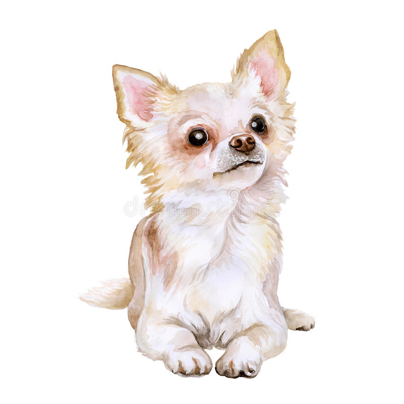 Watercolor portrait of popular Mexican breed Chihuahua dog on white background. Hand drawn sweet home pet. Greeting card design. Clip art. Add your text. Short royalty free illustration