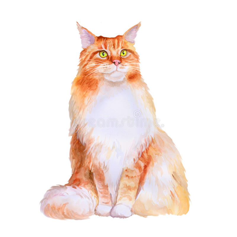 Watercolor portrait of red maine coon long hair cat on white background. Hand drawn sweet home pet. Bright colors, realistic look. Emerald eyes. Greeting card vector illustration