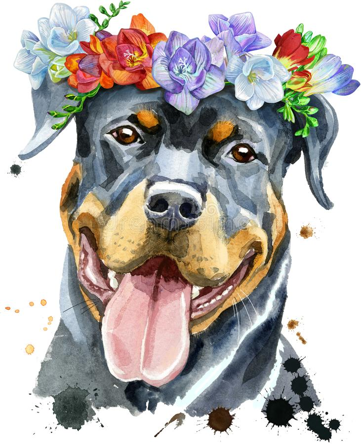 Watercolor portrait of rottweiler in a wreath of freesia royalty free stock images