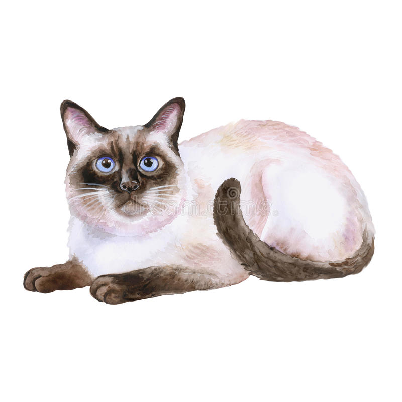 Watercolor portrait of siamese black and white short hair cat on white background. Hand drawn home pet. Watercolor portrait of siamese black and white short hair royalty free illustration