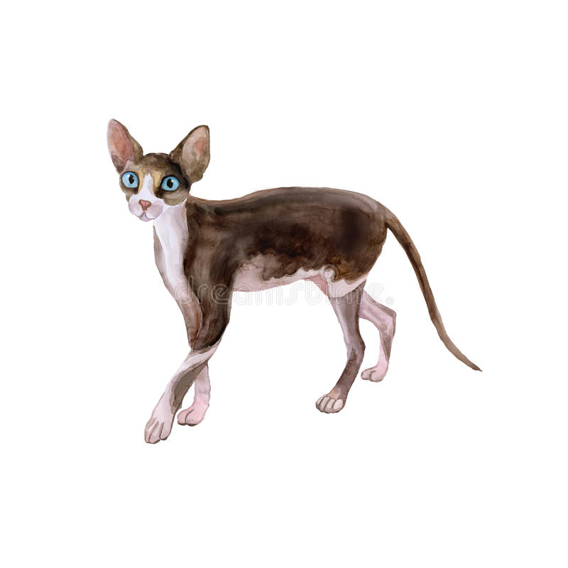 Watercolor portrait of sphynx black and white no hair cat on white background. Hand drawn sweet home pet stock illustration