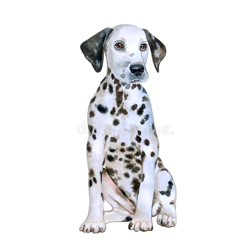 Watercolor portrait of white in black dots Dalmatain breed dog on white background. Hand drawn sweet pet. Bright colors, realistic look. Greeting card design stock photography