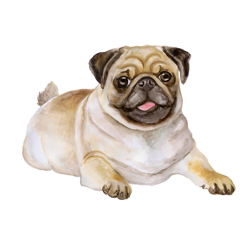 Watercolor portrait of white and black Pug breed dog, Mops, Chinese pug, Dutch bulldog, Dutch mastiff, Mini mastiff stock illustration