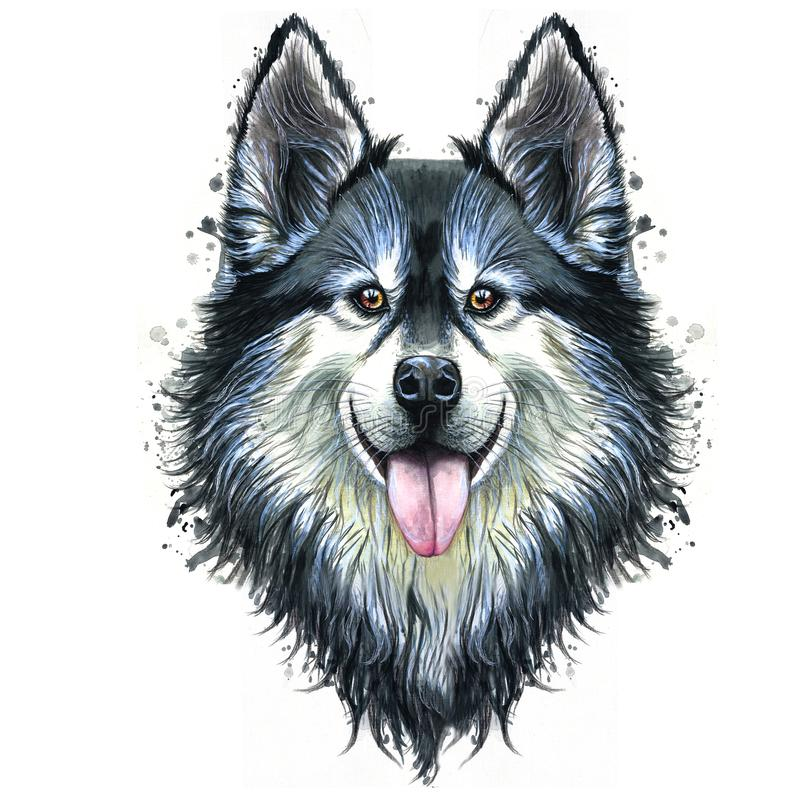 Watercolor print of a dog portrait of a or husky breed, a mammal animal on a white background with long hair, smiling for d. Esign royalty free illustration