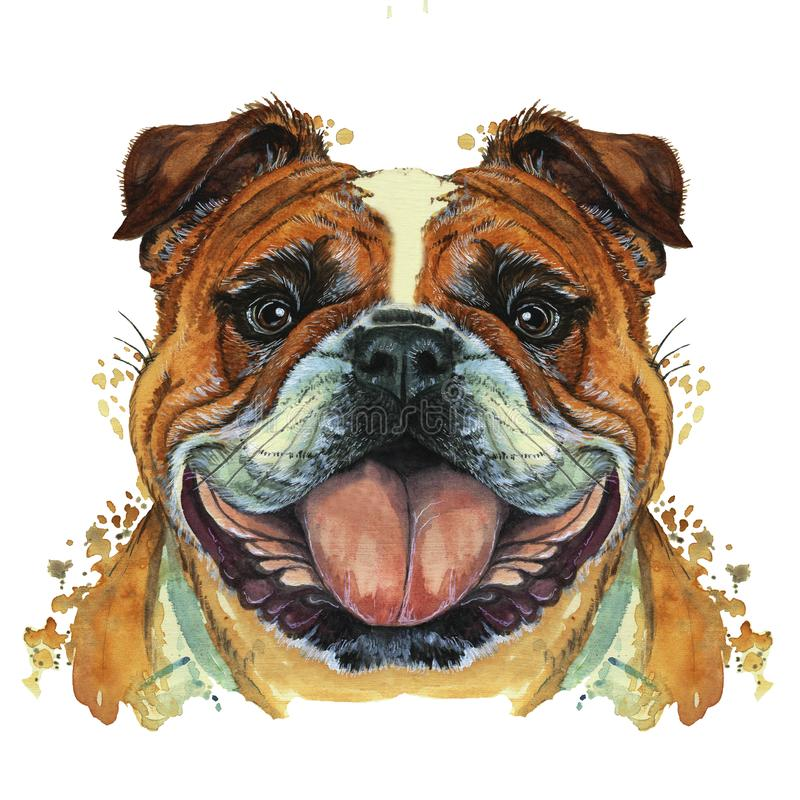 Watercolor printshop, print on the theme of the breed of dogs, mammals, animals, breed English bulldog, bulldog, portrait, color r. Ed-white, intelligent eyes vector illustration