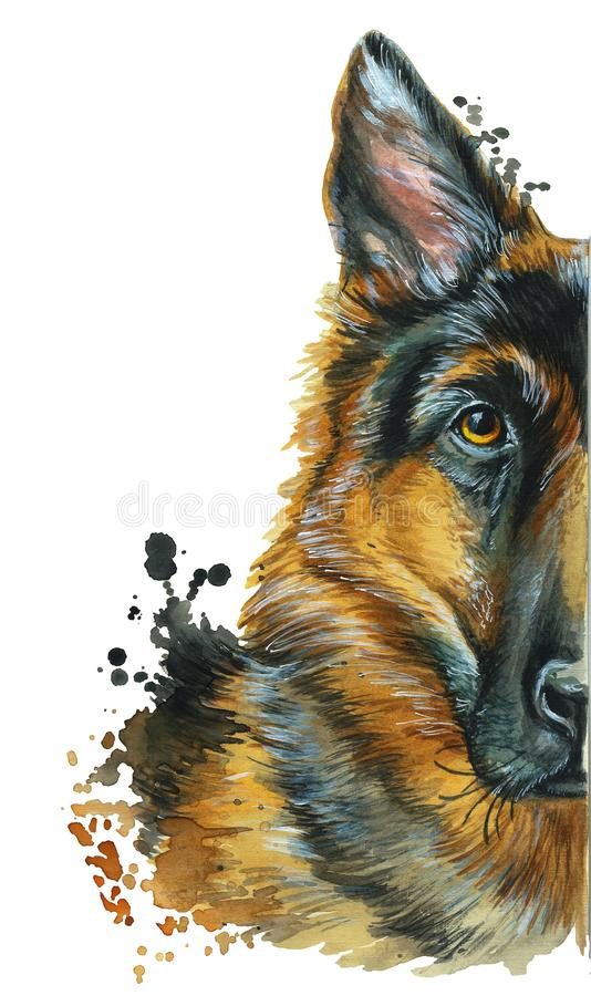 Watercolor printshop, print on the theme of the breed of dogs, mammals, animals, breed German shepherd, portrait, color red-black, stock illustration