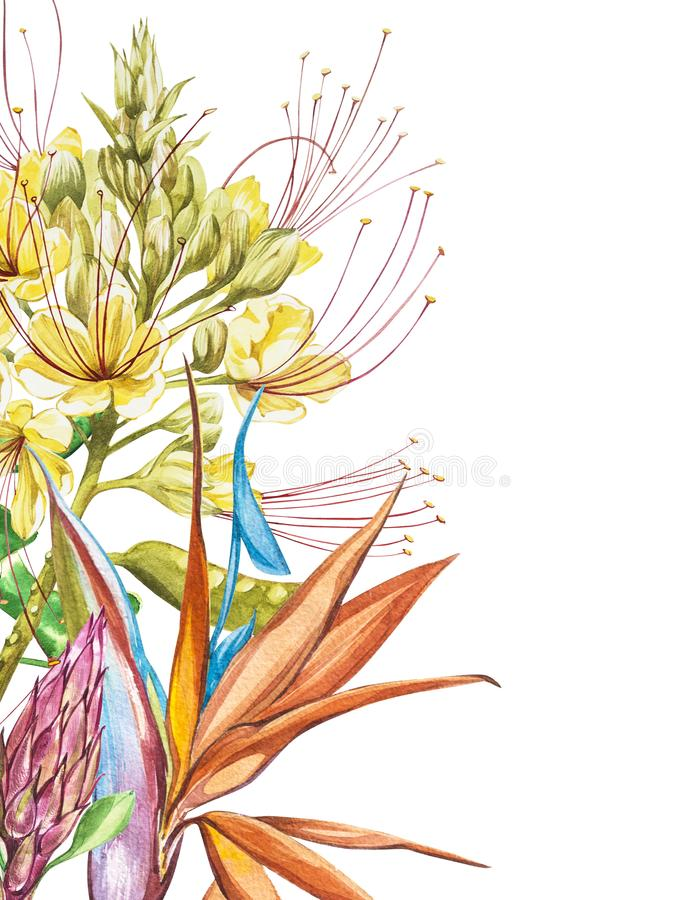 Watercolor Protea, Caesalpinia and Strelitzia flowers bouquet. Tropical decoration floral botanical illustration. Watercolor isolated. Perfect for invitation royalty free illustration