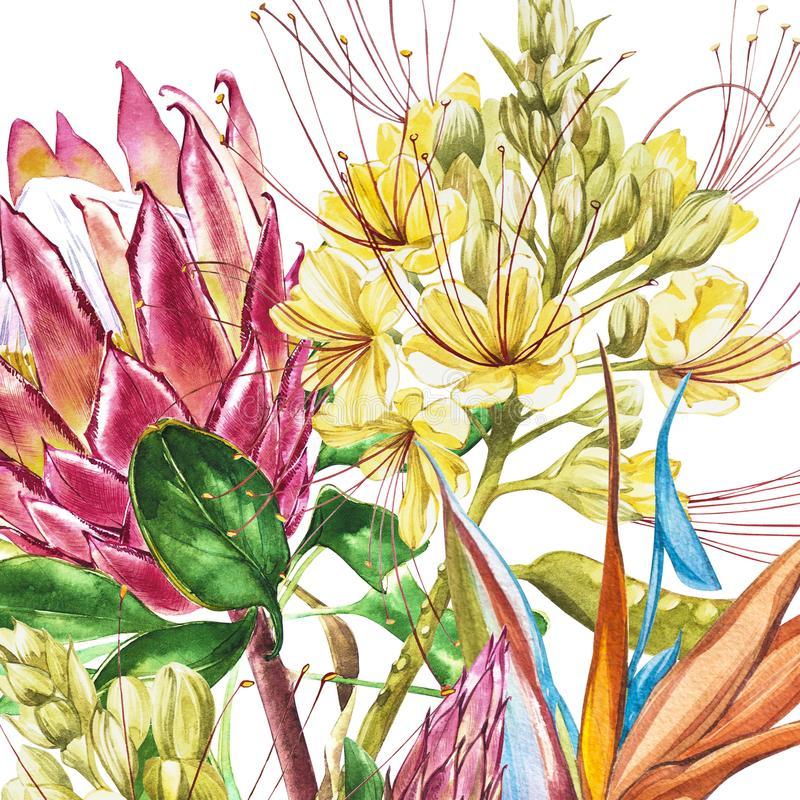 Watercolor Protea, Caesalpinia and Strelitzia flowers. Tropical decoration floral botanical illustration. Watercolor. Isolated. Perfect for invitation, wedding stock illustration