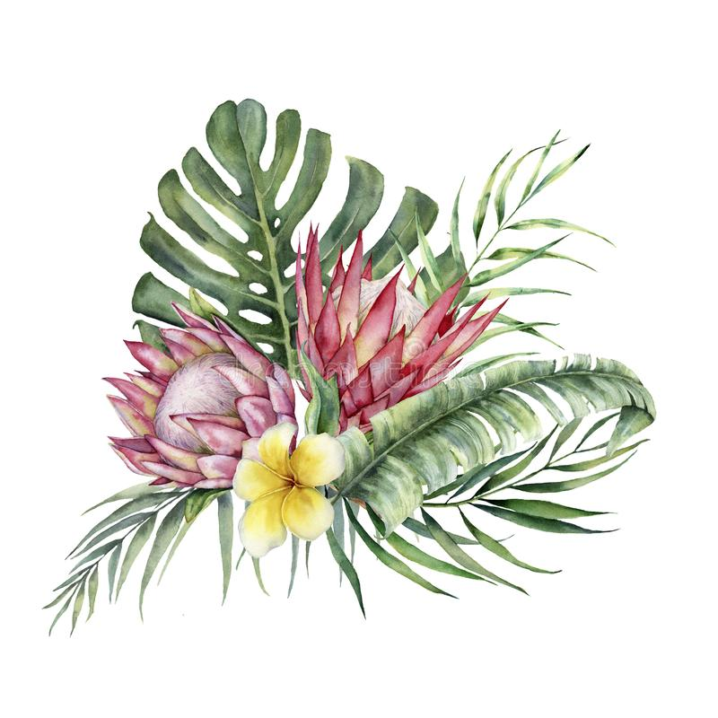 Watercolor protea and plumeria bouquet. Hand painted tropical flowers and leaves isolated on white background. Nature royalty free illustration