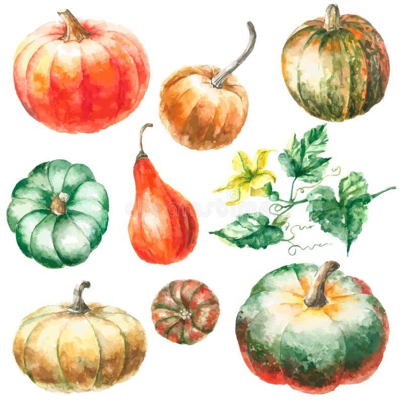 Watercolor pumpkin. royalty free stock images